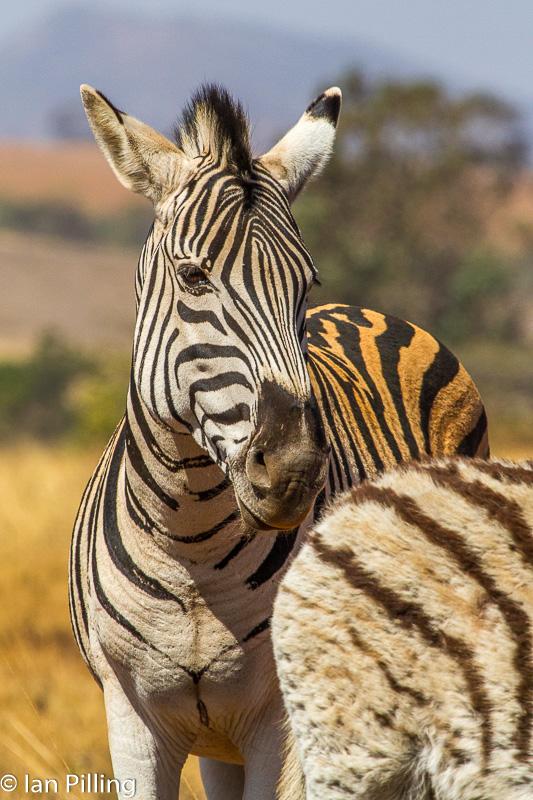 20120812-Africa-6119-epson-semi.jpg