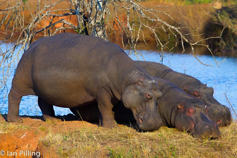 20120812-Africa-6207-epson-semi.jpg