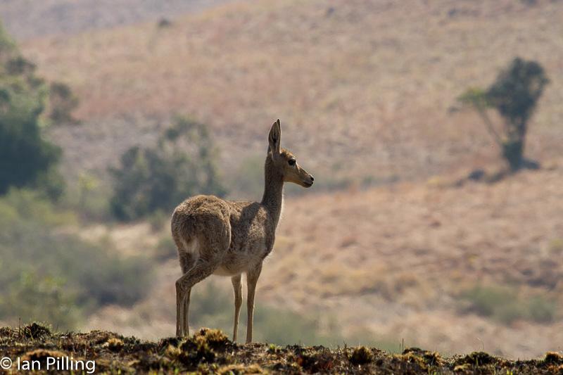 20120816-Africa-Thursday-7133-epson-semi.jpg
