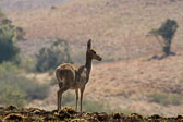 20120816-Africa-Thursday-7133-epson-semi.jpg