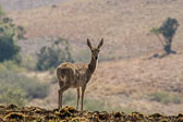 20120816-Africa-Thursday-7135-epson-semi.jpg